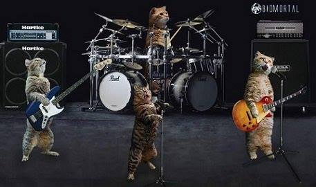 Rock Band are Cool Cats